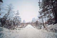 Un pequeño grupo de turistas que viajan a través del bosque nevoso en día nublado del invierno imagenes de archivo