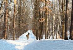 Un pequeño grupo de turistas que viajan a través del bosque nevoso en día nublado del invierno Los turistas que caminan a través  foto de archivo libre de regalías