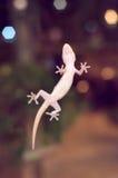 Un pequeño lagarto en la pared del espejo Imagen de archivo