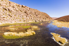 Un pequeño lago en reserva nacional de los flamencos del Los Foto de archivo