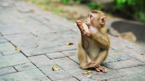 Un pequeño mono come plátanos en un parque nacional Selva asiática con los monos almacen de metraje de vídeo