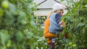 Un pequeño niño examina los tomates en un invernadero almacen de metraje de vídeo