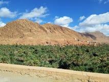 Un pequeño oasis en el desierto fotografía de archivo libre de regalías