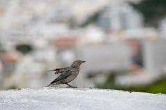Un pequeño pájaro Foto de archivo libre de regalías