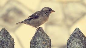 Un pequeño pájaro Imágenes de archivo libres de regalías
