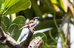 Un pequeño pájaro en el árbol Foto de archivo
