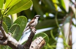 Un pequeño pájaro en el árbol Fotos de archivo libres de regalías
