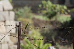 Un pequeño pájaro que se sienta en el alambre de púas Imágenes de archivo libres de regalías
