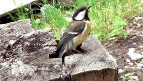 Un pequeño pájaro sale de la colmena