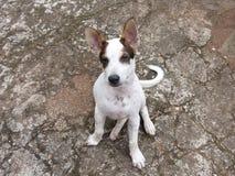 Un pequeño perrito lindo Imagen de archivo libre de regalías