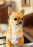 Un pequeño perro Fotografía de archivo