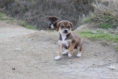 Un pequeño perro dos en Bulgaria - mejor frient de gente Imágenes de archivo libres de regalías