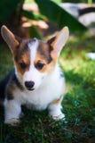 Un pequeño perro en la hierba Imagen de archivo