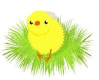 Un pequeño pollo lindo ilustración del vector
