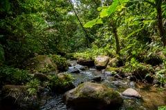 Un pequeño río en la selva densa verde Imagen de archivo libre de regalías