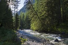 Un pequeño río en las montañas de Altai Rusia Fotos de archivo libres de regalías