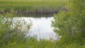 Un pequeño río reservado metrajes