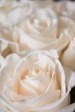 Un pequeño ramo de rosas rosas claras Fotos de archivo
