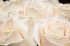 Un pequeño ramo de rosas rosas claras Imagen de archivo libre de regalías