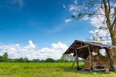 Un pequeño refugio debajo Niza del cielo azul claro en el campo verde Imagenes de archivo
