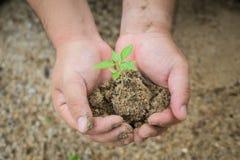 Un pequeños árbol y suciedad se sostuvieron al lado de una mano humana Foto de archivo libre de regalías