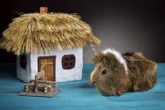 Un pequeños conejillo de Indias y casa con un tejado cubierto con paja foto de archivo libre de regalías