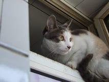 Un peque?o gato blanco negro amarillo imagen de archivo