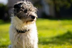 Un peque?o perro del terrier en hierba verde fotos de archivo