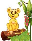 Un pequeño tigre que se sienta en una madera Foto de archivo libre de regalías