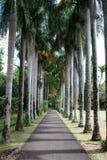 Un percorso allineato albero fotografie stock libere da diritti