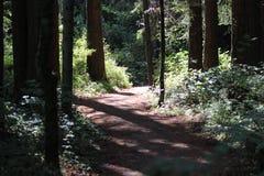 Un percorso attraverso gli alberi immagini stock
