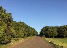 Un percorso attraverso gli alberi fotografie stock