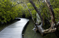 Un percorso attraverso le mangrovie Immagini Stock Libere da Diritti