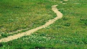 Un percorso attraverso un prato con i fiori Fotografie Stock Libere da Diritti