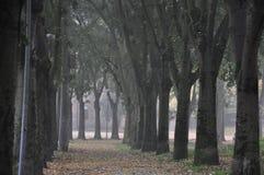 Un percorso beetween gli alberi Fotografia Stock Libera da Diritti