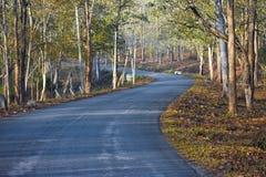 Un percorso che conduce allo sconosciuto - Nagarhole fotografie stock
