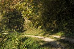 Un percorso che conduce attraverso il legno Fotografia Stock