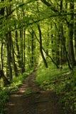 Un percorso completo un più forrest verde fertile Fotografie Stock