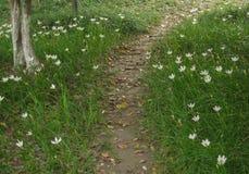 Un percorso con con il fiore Fotografia Stock Libera da Diritti
