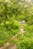 Un percorso conduce attraverso le mangrovie a Playa Langosta L'acqua partecipa dalle piovosità pesanti della tempesta tropicale N Fotografie Stock