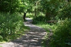 Un percorso del terreno boscoso nel Regno Unito fotografie stock libere da diritti