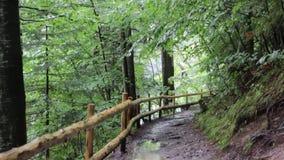 Un percorso della sporcizia in un piccolo burrone della foresta di autunno, in un giorno soleggiato caldo, paesaggio archivi video