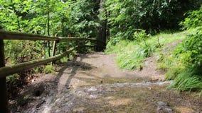Un percorso della sporcizia in un piccolo burrone della foresta di autunno, in un giorno soleggiato caldo, paesaggio stock footage