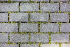 Un percorso della tegola di cemento armato con il fondo di struttura del modello dell'erba immagine stock libera da diritti