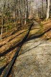 Un percorso di camminata accessibile della sedia a rotelle attraverso il legno fotografia stock libera da diritti