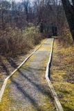 Un percorso di camminata accessibile di handicap attraverso il legno fotografia stock libera da diritti