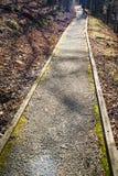 Un percorso di camminata accessibile di handicap attraverso la foresta immagini stock libere da diritti