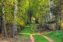 Un percorso di foresta Fotografie Stock Libere da Diritti