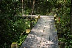 Un percorso di legno attraverso una foresta Immagine Stock