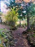 Un percorso e la foresta di colore in autunno in anticipo immagini stock libere da diritti